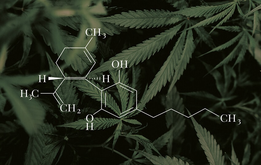 nacani-cbd-hund-snack-leckerlie-blog-cannabinoide-hanf