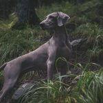 nacani-cbd-hund-snack-leckerlie-blog-natur-kraft