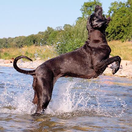 dogge-lebensfreude-spielt-im-wasser-nacani-cbd-Hundesnack