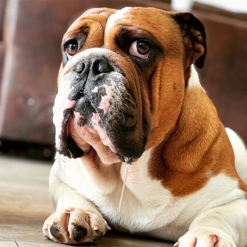 testhund bambam cbd hunde leckerlis