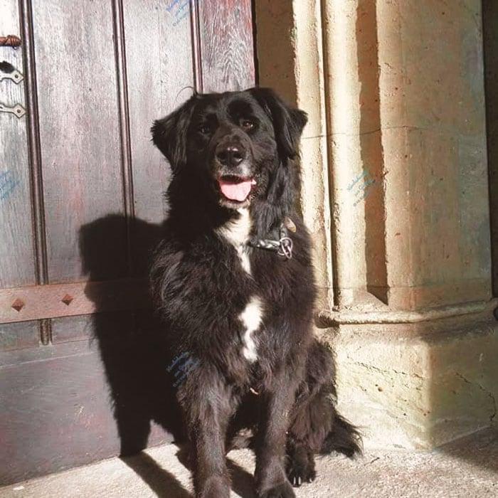 testhund marla cbd hunde leckerlis