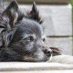 nacani-Alter-Hund-CBD-Hanf-Snack