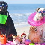 nacani-Auto-Urlaub-Angst-Hund-CBD-Hanf-Snacks