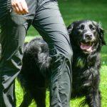 nacani-hundetraining-CBD-öl-leckerli-fuer-den-hund